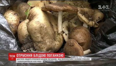 Шесть человек отравились бледной поганкой в Днепропетровской области