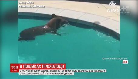 В поисках прохлады в Калифорнии медведь забрел в человеческий бассейн