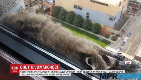 В США енот от испуга взобрался на крышу 23-этажного небоскреба