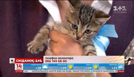 Кошенята шукають новий дім