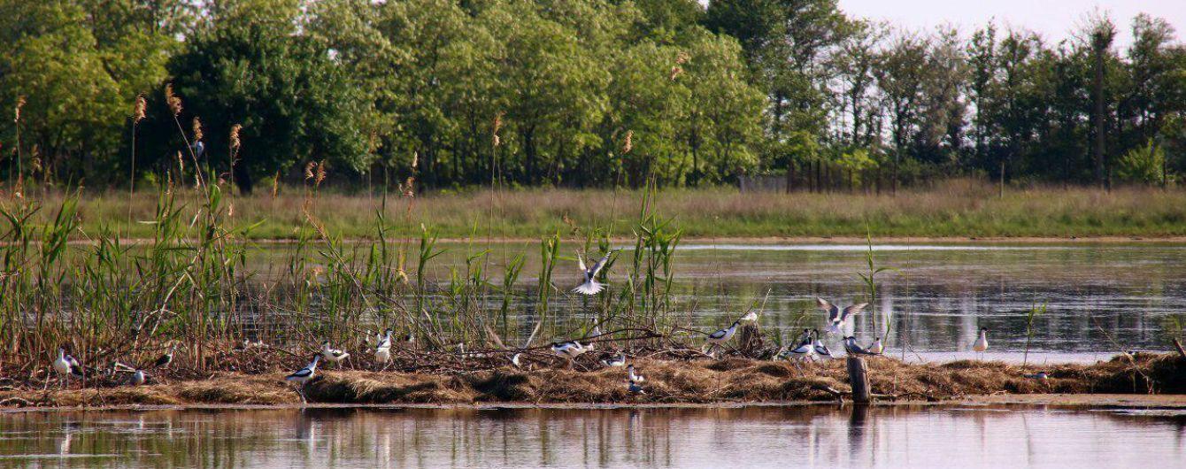 На Кінбурнській косі для гніздування рідкісних та видів птахів, що зникають, збудовано штучний острів