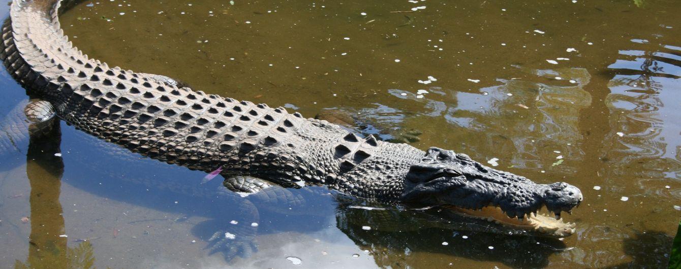 На Ямайці чоловік ховався в холодильнику від крокодила, що поранив йому ногу