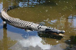 На Ямайке мужчина прятался в холодильнике от крокодила, который поранил ему ногу