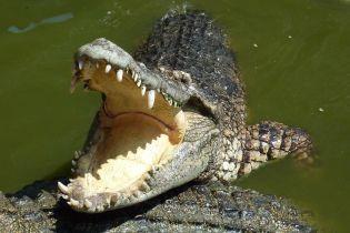 В Австралии рыбак выцарапал глаз крокодилу, чтобы спастись от него