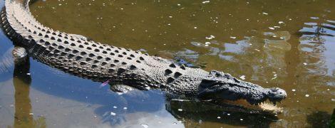 На Филиппинах подросток вытащил сестру из пасти четырехметрового крокодила