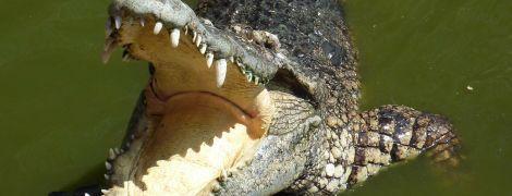 В Австралії рибалка видряпав око крокодилові, щоб врятуватися від нього