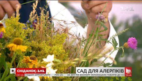 Які рослини можна вирощувати алергікам