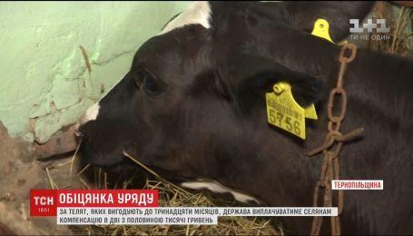 Держава виплачуватиме селянам компенсацію за телят, яких вони вигодували до 13 місяців