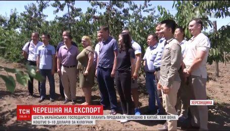 Украинские хозяйства планируют продавать черешню в Китай