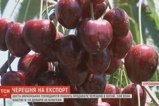 На китайском рынке готовы выкладывать за украинскую черешню 9-10 долларов за килограмм