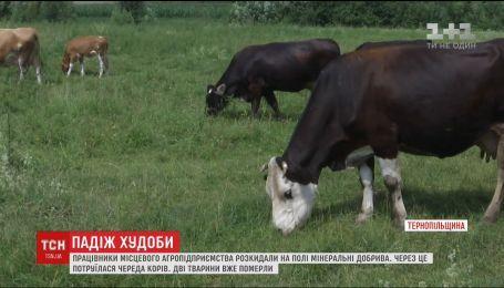 В Тернопольской области от отравления химикатами погибли коровы
