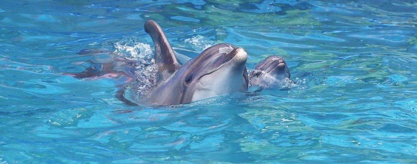 В одеському дельфінарії просто під час шоу народилося дельфінятко