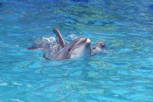 В одесском дельфинарии прямо во время шоу родился дельфиненок