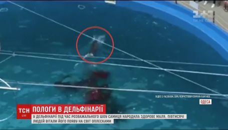 В Одесе дельфиненок родился во время шоу