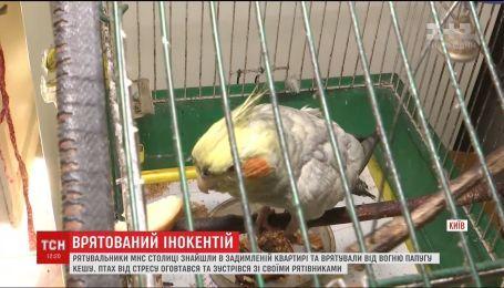 Киевские спасатели вынесли из задымленной квартиры попугая