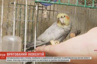 Попугай Иннокентий прославил своего спасителя, который поймал и вынес его из огня