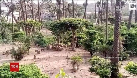 В Індії мавпи врятували із колодязя леопарда