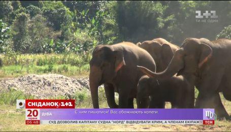 В мире отмечается День защиты слонов в зоопарках