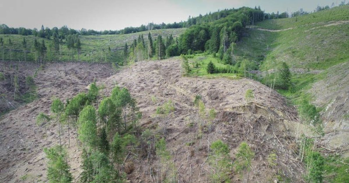 Последствия вырубки лесов в Закарпатье @ WWF Ukraine