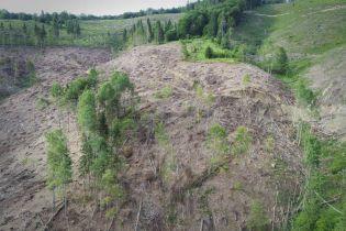 Из-за нового закона о сохранении лесов могут вырубить все Карпаты и никто не будет наказан