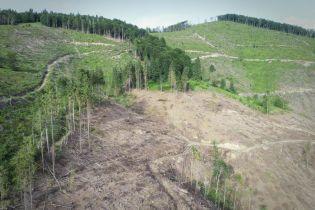 Сплошь срубленный лес. Дрон снял на видео масштабы уничтожения деревьев на Закарпатье