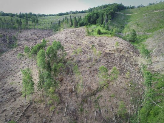 Через новий закон про збереження лісів можуть вирубати всі Карпати і ніхто не буде покараний