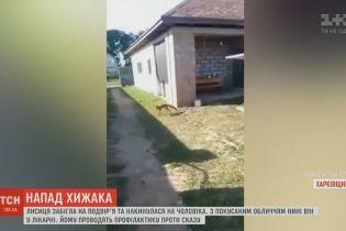 На Харьковщине лиса атаковала мужчину на его же дворе