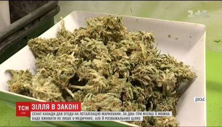 Сенат Канады легализовал употребление и выращивание марихуаны