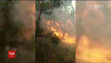 На Днепропетровщине сгорели более двух гектаров соснового леса