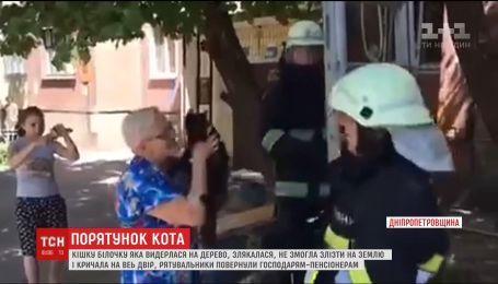 Со слезами и аплодисментами в Днепропетровской области спасали кошку