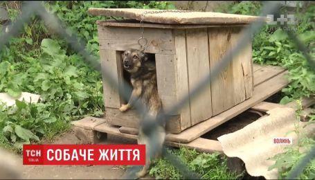 Собачий концтабір. У притулку поблизу Нововолинська тварини голодують та потерпають від спраги