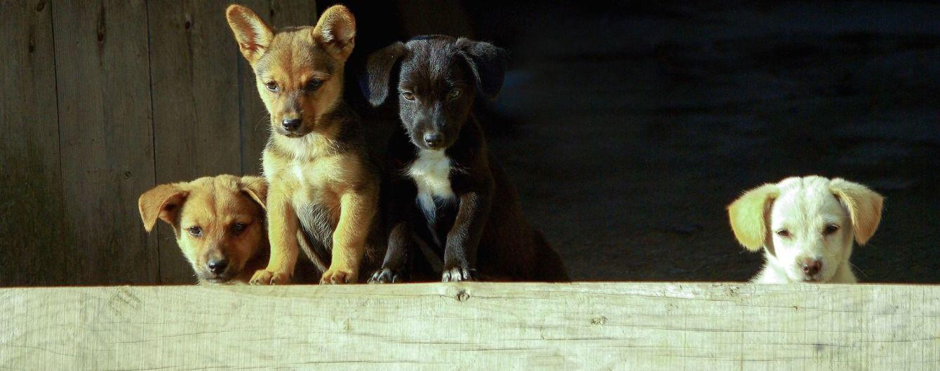 Южнокорейский суд впервые признал убийство собак ради еды незаконным