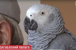 Під Києвом знайшли рідкісного великого папугу Жако