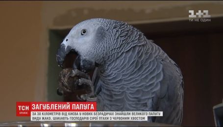Под Киевом обнаружили большого попугая вида Жако