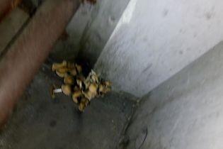В українському потягу виросли гриби