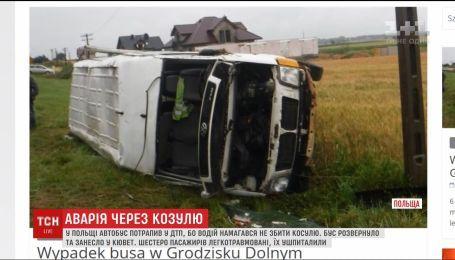 Автобус у Польщі потрапив в ДТП через козулю