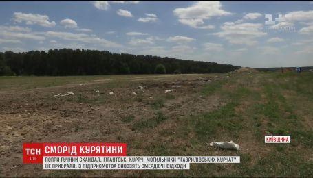 """Справа """"Гаврилівських курчат"""". ТСН перевірила, чи вільно нині дихається у селищі, де знайшли курячий могильник"""