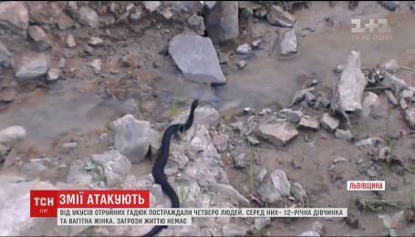 Повзуча небезпека. Після укусів отруйних гадюк на Львівщині шпиталізували чотирьох людей