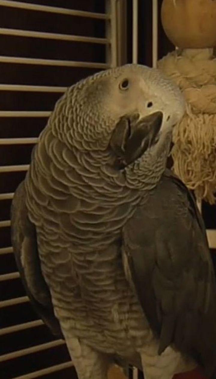 Возвращение блудного попугая. Сюжет ТСН помог хозяевам разыскать потерявшейся птицы