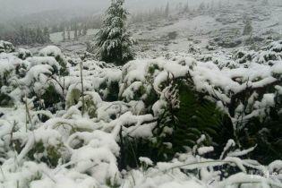 В Карпатах выпал обильный снег