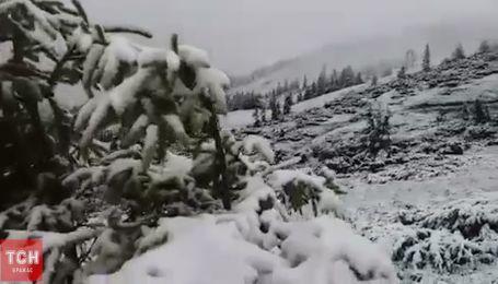 Карпаты заснежило: поход за грибами на Драгобрате