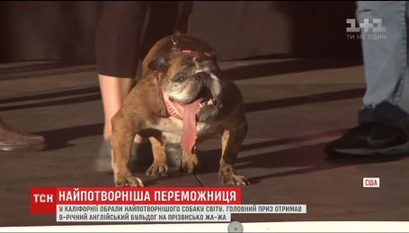 В США выбрали самую уродливую собаку мира