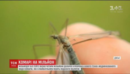 Білл Гейтс вирішив створити унікальних комарів-мутантів