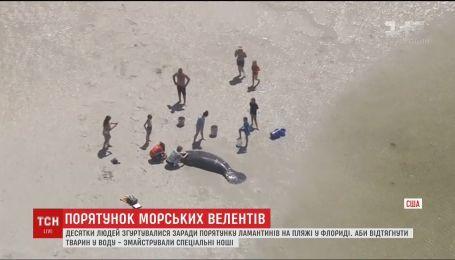 Во Флориде спасли ламантинов, которые выбросились на берег