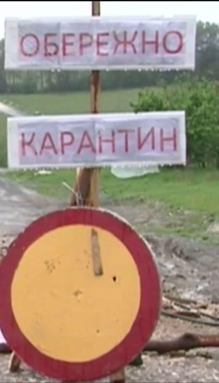На Одещині зафіксували спалах африканської чуми свиней