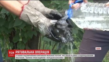 Во Львове чрезвычайники вытащили котенка из бочки с отработанным маслом