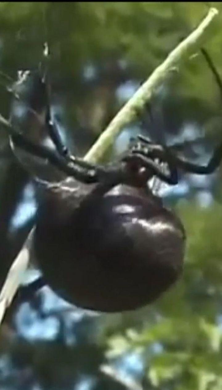 В Одесской области неизвестное насекомое положило на реанимационную кровать 30-летнюю женщину