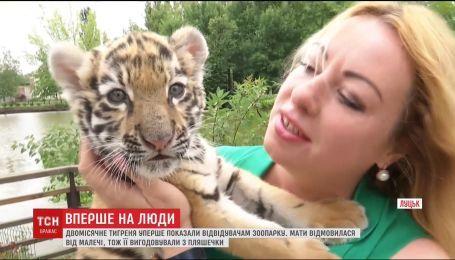 Двомісячне тигреня Тріша нарешті вийшло до відвідувачів Луцького зоопарку