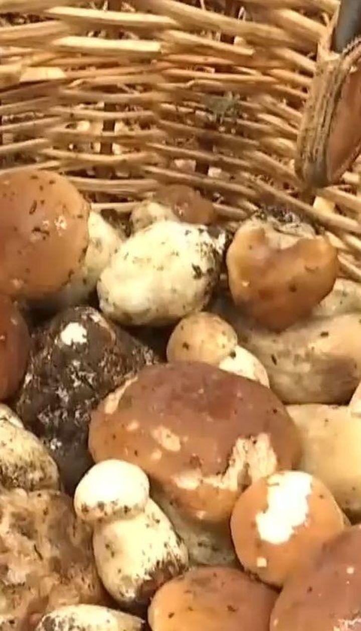 В Карпатах стартував сезон збору грибів