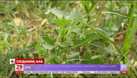 Как превратить сорняки в удобрение